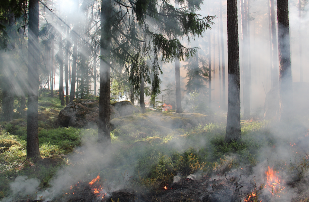 Kalesnikoff Mass Timber wildfire mitigation forest image