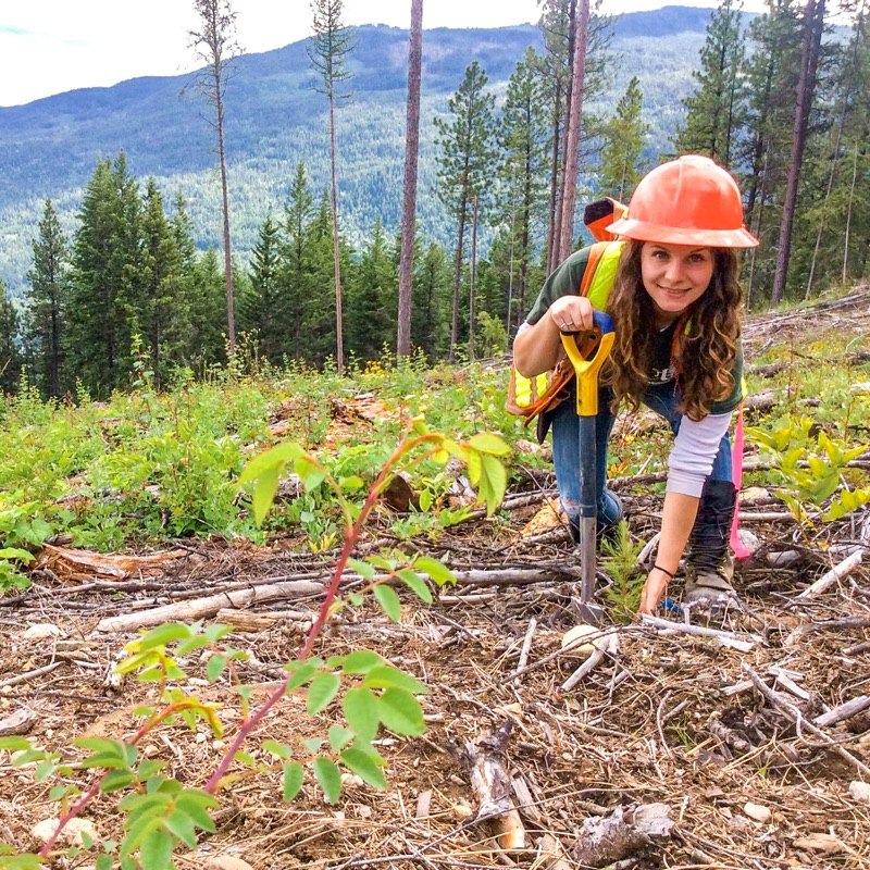woman tree planting bending down with shovel to plant douglas fir tree